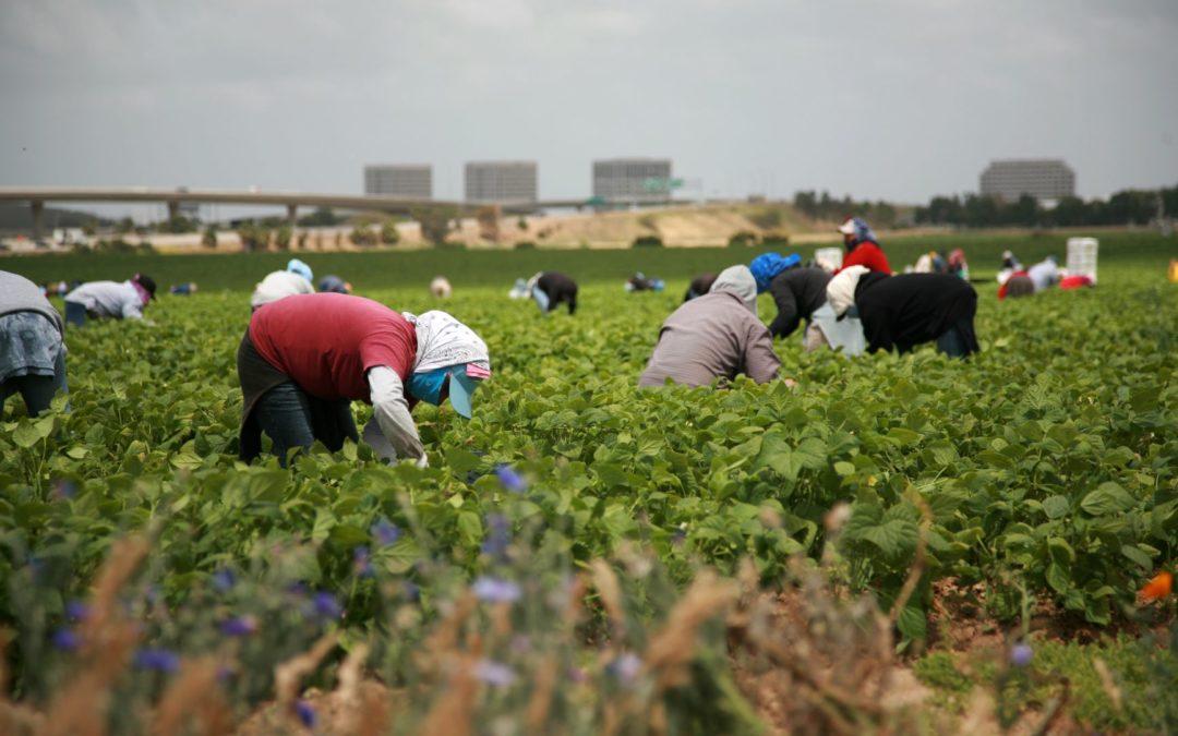 El Tribunal Supremo de Washington escuchará el argumento oral esta semana en el caso de la exclusión de los trabajadores agrícolas de la protección de horas extras