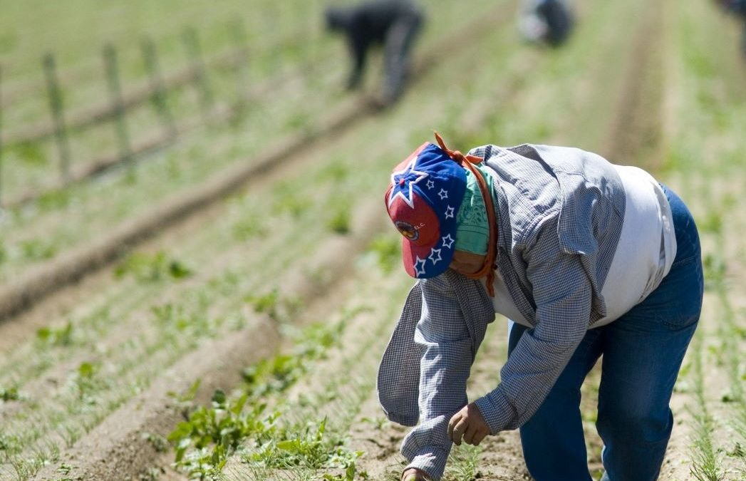 Washington H-2A Workers Sue One of the Nation's Largest Agricultural Employers
