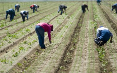 Farm Worker Union Familias Unidas por la Justicia Sues State over Housing Rules that Allow for Bunkbeds Contrary to Scientific Evidence